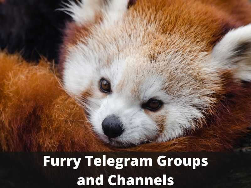 Furry Telegram Group and Channel Links list
